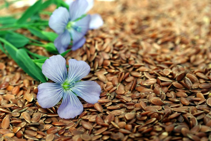 Flax Seeds and Hormones