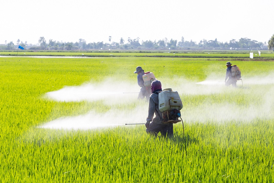 Arsenic in rice - An Overview