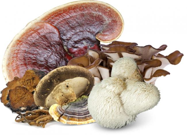 Five Medicinal Mushrooms - Health Benefits