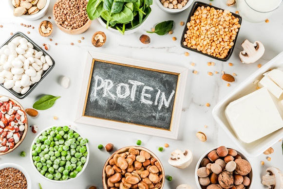 The Protein Myth