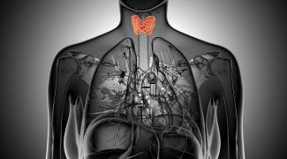 Where to Start with Thyroid Imbalance